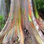 boje-u-prirodi-2