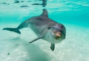 delfini-zanimljivost