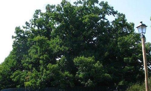neobicna-svojstva-drveta-1