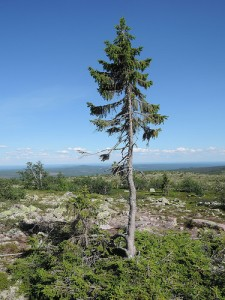 neobicna-svojstva-drveta-3