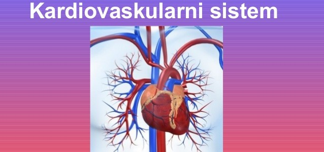 anatomija-kardiovaskularni-sistem-1