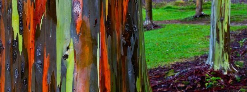 drvo-duginih-boja-cover