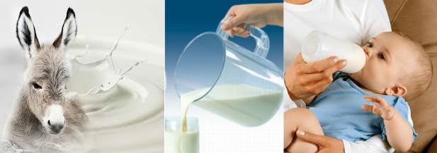 koje-je-mleko-u-ljudskoj-upotrebi-cover