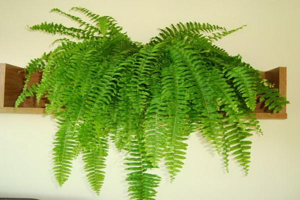 sobne-biljke-koje-ciste-vazduh-1