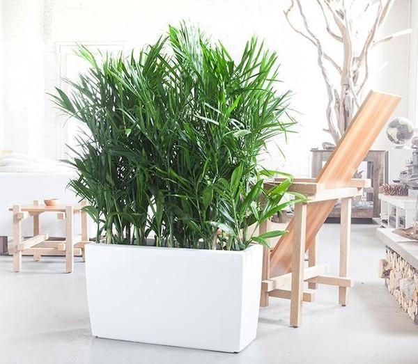 sobne-biljke-koje-ciste-vazduh-2