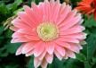 sobne-biljke-koje-ciste-vazduh-cover