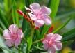 kobne-biljke-cover