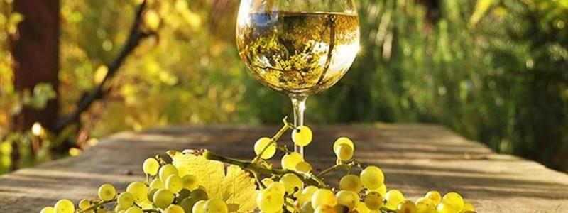 Belo-vino-kao-lek-naslovna