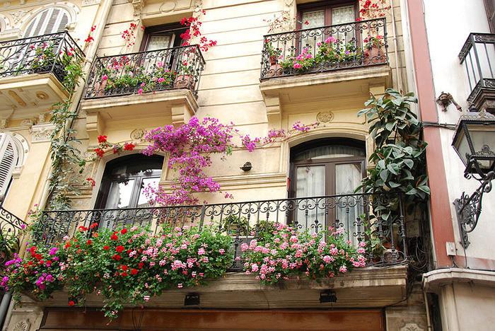 uzivanje-na-balkonu-biljke-1