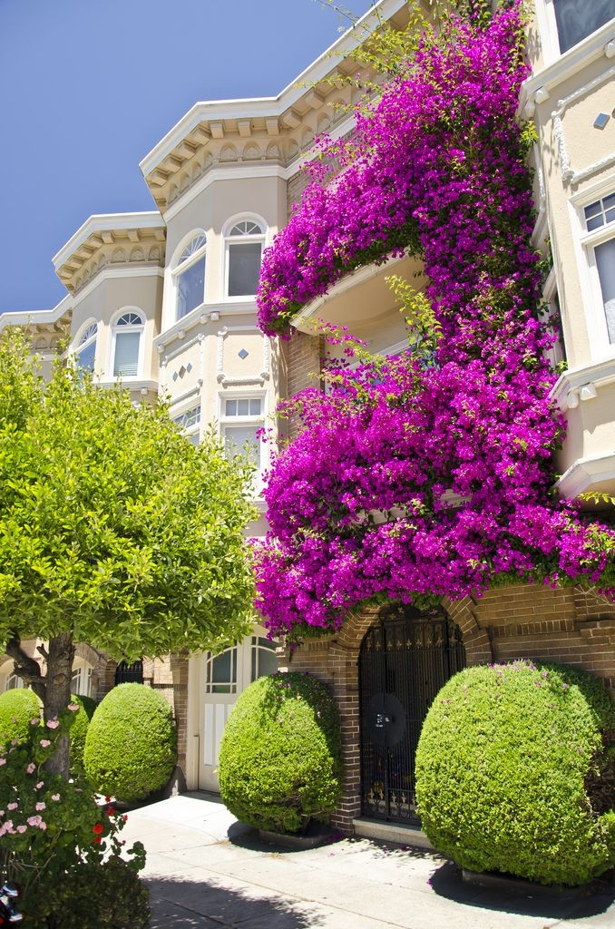 uzivanje-na-balkonu-biljke-2