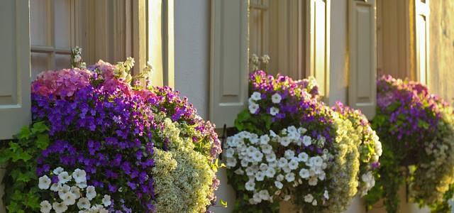 uzivanje-na-balkonu-biljke